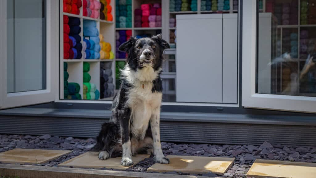 Home office being used as a yarn business with shelves of colourful yarn inside and a black and white dog outside