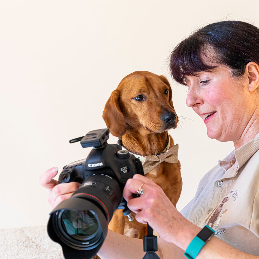 Photographer showing a dog a photo of itself on a camera