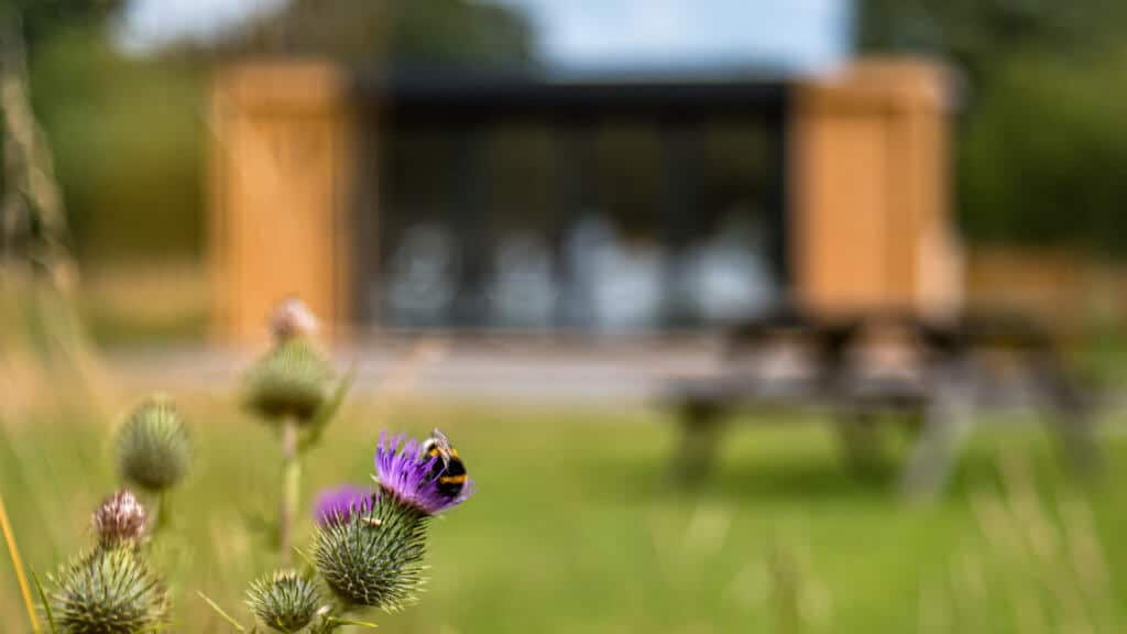 Exterior of an Inspiration used as RSPB welcome hub with a bumblebee on a thistle in the foreground