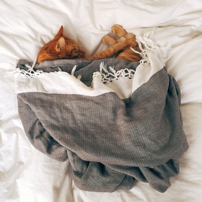 hygge-cat