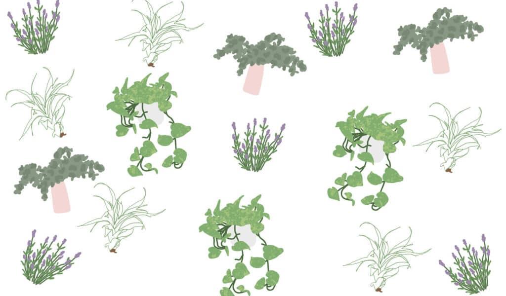 house plants infographics